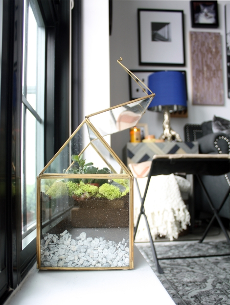 my terrarium on a windowsill