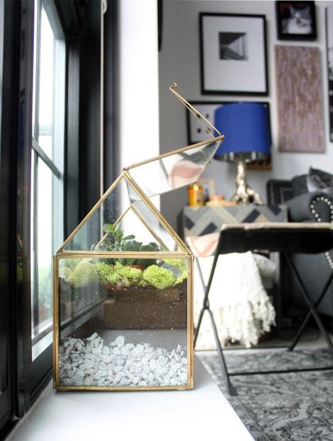 my terrarium on a windowsill